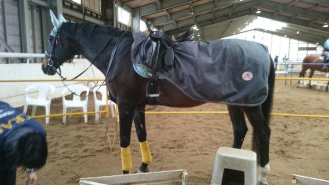 ヴィテン 乗馬体験